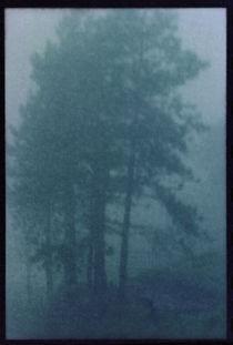 Foggy Forest by alejo schatzky