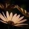 3-bloemen