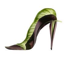 Shoe Fleur 56 by Michel Tcherevkoff