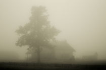 house in the Mist by Ernestas Martinkus