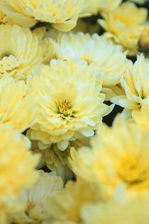 Blumenmeergelb