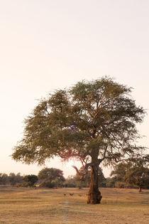 Lone Tree von Jessie English