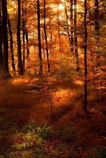 Deutschland / Germany 15 - Herbststimmung / Autumn mood by Johannes Ehrhardt