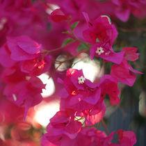 Scarlet flower by Natalia Stangrit