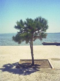 Treeinasquare