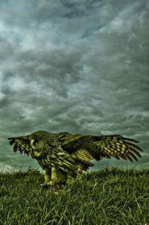 Great grey owl von Stefan Antoni - StefAntoni.nl