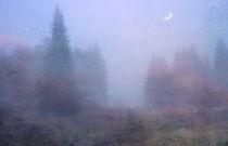 im Nebelwald von Franziska Rullert
