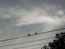 Birds In Phone Wires by godknowsme