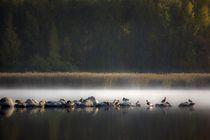 Birds in Morning Mist by Riku Nikkila
