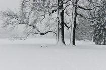 Winter Dream von Jan-Patrick Schmitz