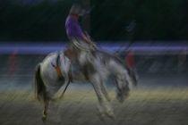 Ride'em cowboy by S A