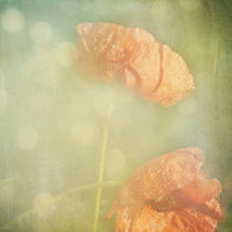 poppy tears at the end of summer von Franziska Rullert