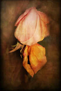 Wilted by Rozalia Toth