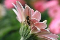 Bee on Flower von Megan Schatzman