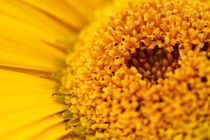 Pollen von Megan Schatzman