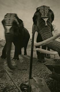 The Circus (3) by Andrei Becheru
