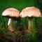 Mushroom-002