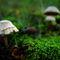 Mushroom-004