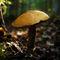 Mushroom-005