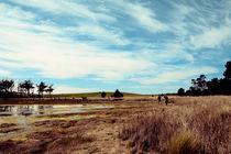 The Marsh II by Dahlia Foo