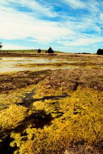 The Marsh by Dahlia Foo