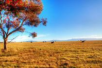 Sheep by Dahlia Foo