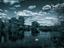The White Swan by Sven K.
