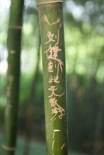 Graffitti on Bamboo, China by Simeon Jones