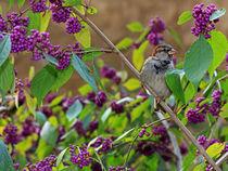 Vogelparadies von Wolfgang Dufner