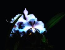 Orquidea-neon