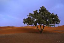 Albero nel deserto by Federico C.