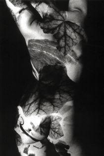 Projektion-body