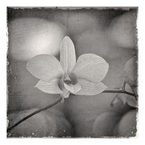 Orchidaceae1 von ricardo junqueira