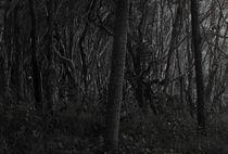 Dark Forrest by Darren Martin