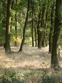 Waldeindrücke im Herbst von Ka Wegner