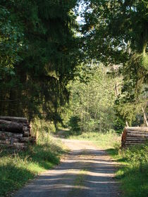 Waldweg von Ka Wegner