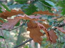 Herbstblätter by Ka Wegner