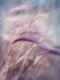 whispers in the wind von Priska  Wettstein