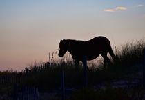 Wild Spanish Mustang von John Greim