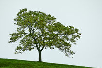 One Tree Hill by John Greim
