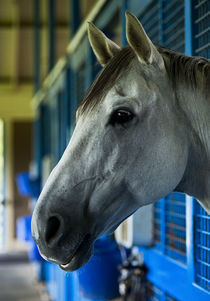 Race horse in stable. by John Greim