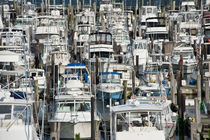 Cape May Marina, New Jersey, USA by John Greim