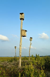 Birdhouses in salt marsh, Cape Cod, USA von John Greim