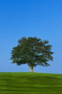 Healthy tree. by John Greim