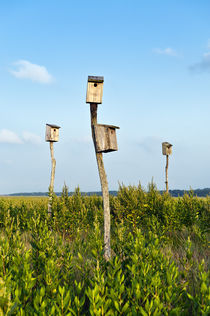 Birdhouses in salt marsh, Sandwich, Cape Cod, USA von John Greim