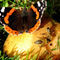 Bees-and-the-butterfly-on-a-pear