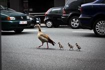 traffic von Sander de Wilde