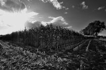 agriculture landscapes von Jens Uhlenbusch