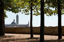 Duomo, Massa Marittima by Michael Schickert