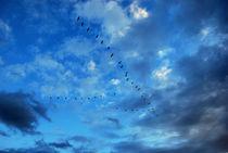 Blue Birds by Boris Chernykov